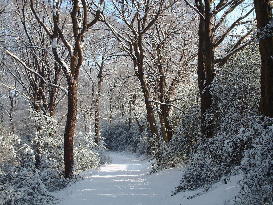 Winterwald auf dem Hohenhagenvor zehn Jahren. Foto: Lothar Kaiser