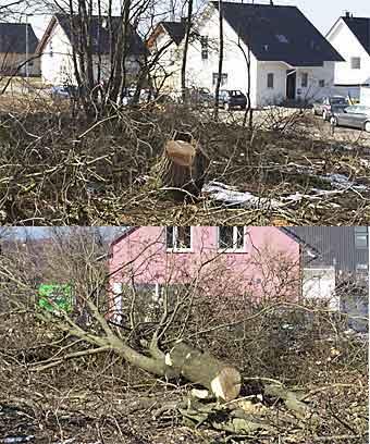 [Erneute Abholzaktion im Neubaugebiet auf dem Hohenhagen]