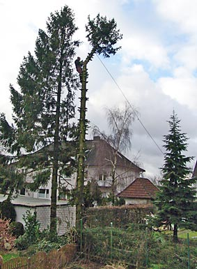 Mein Freund der Baum ist tot. Foto: Lothar Kaiser