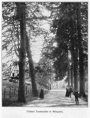 Vor 1906 standen die Tannen noch. Dann kam der Sturm.